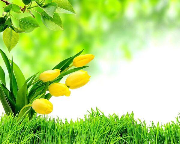 Зеленая весна Фоновые обои - Загрузить на свой мобильный телефон от PHONEKY