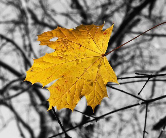 foto de Feuille d'automne Hd Fond d'écran - Télécharger sur votre mobile ...