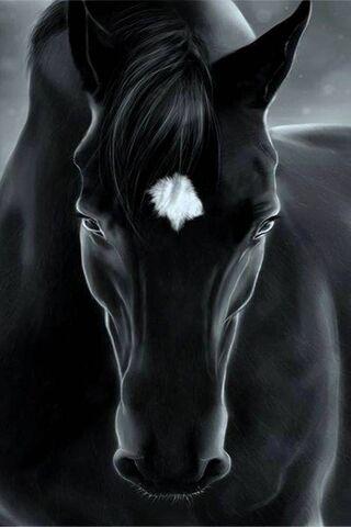 Czarny koń