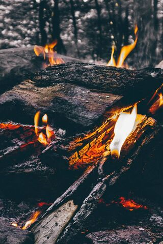 Wood Fire Camping
